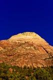 在山腰的结构树 免版税库存图片