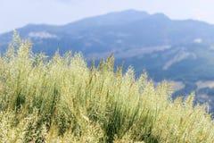 在山腰的草 免版税库存照片