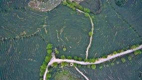 在山茶园风景顶部的航拍 免版税库存图片