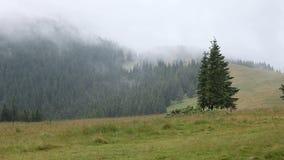 在山草甸和森林的浓雾 股票录像