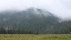 在山草甸和森林的浓雾 股票视频