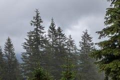 在山草甸和森林的浓雾 免版税库存图片