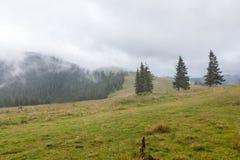 在山草甸和森林的浓雾 库存照片