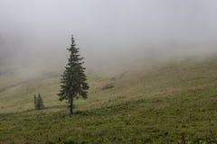 在山草甸和森林的浓雾 免版税库存照片