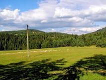 在山草甸的绵羊牧群 免版税库存图片