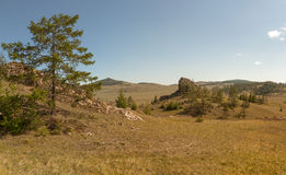 在山谷的落叶松属。东部萨彦岭。 库存图片