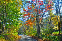 在山路的秋天颜色 库存图片