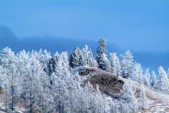 在山边蓝天背景的冬天积雪的树 库存图片