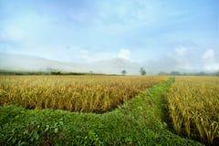 在山附近的米领域 库存图片