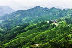 在山附近的茶园在中国 免版税库存照片