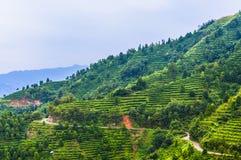 在山附近的茶园在中国 免版税库存图片