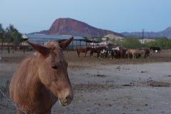 在山附近的马 免版税图库摄影