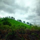 在山顶的树 免版税库存照片