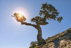 在山顶部的杜松树 太阳光芒 免版税库存图片
