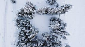 在山顶部的积雪的杉木,拍摄从空气 免版税库存图片