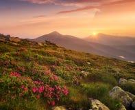 在山领域的花在日出期间 库存照片