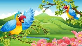 在山风景的两只五颜六色的鹦鹉 免版税库存图片