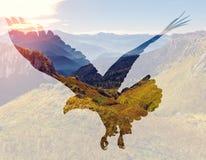 在山风景背景的白头鹰 免版税库存图片