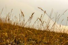在山高山草甸的草 免版税库存图片