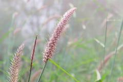 在山高近的地平线的草花 免版税库存照片
