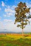 在山麓小丘的树 免版税库存图片