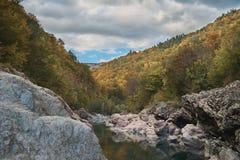 在山,在森林里,在一明亮的好日子 免版税库存照片