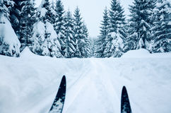在山,新鲜的雪盖的树的速度滑雪 图库摄影