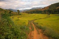 在山, Chiangmai泰国的露台的米 图库摄影