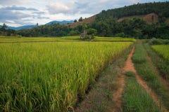 在山, Chiangmai泰国的露台的米 免版税库存照片