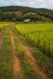 在山, Chiangmai泰国的露台的米 库存照片