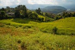在山, Chiangmai泰国的露台的米 库存图片