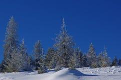 在山19的冬天风景 库存图片