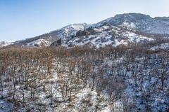 在山14的冬天 免版税库存图片