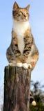 在岗位的杂色猫 免版税库存图片