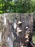 在岗位的真菌 免版税库存图片