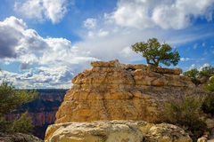在岩层上面的孤立杜松杉树在大峡谷 库存照片