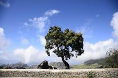 在岩层的被风化的树 免版税库存照片
