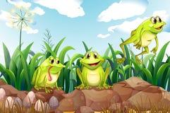 在岩石上的三只青蛙 库存例证