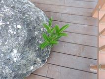在岩石下的植物 库存图片
