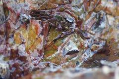 在岩石下的螃蟹由海 免版税图库摄影