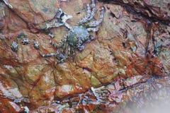 在岩石下的螃蟹由海 免版税库存图片