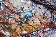 在岩石下的螃蟹由海 图库摄影