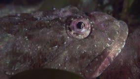 在岩石中的一条小鱼在海底 影视素材