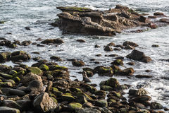 在岩石中的封印游泳在拉霍亚小海湾 库存图片