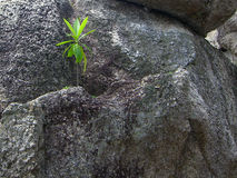 在岩石中的绿色植物 库存照片