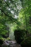 在岩石之间的一条小河在一个晴朗的森林里 库存照片