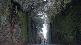 在岩石之间的年轻乐观夫妇奔跑由树盖的路在Anaga自然公园在特内里费岛 ?? 股票录像