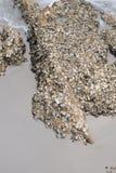 在岩石困住的壳尸体 库存照片