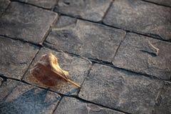 在岩石地面的干燥叶子 免版税库存照片