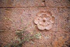 在岩石墙壁上修整的装饰花 库存图片